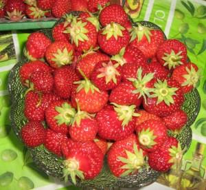 Erdbeeren - selbst gepflückt