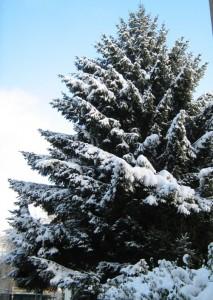 2010-12-21 Winter in der Stadt